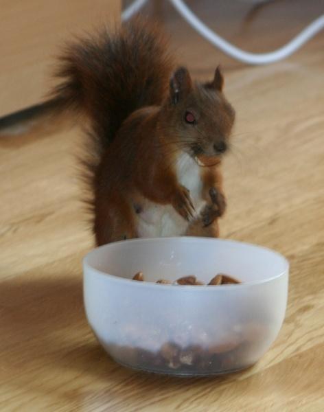 Jag ser lite arg ut på den här bilden, men det var bara för att jag inte ville att någon annan skulle röra min matskål
