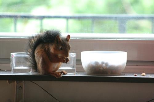 När det regnar ute så är det schysst att sitta vid fönstret och äta